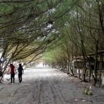 pantai-kuwaru-bantul-yogyakarta